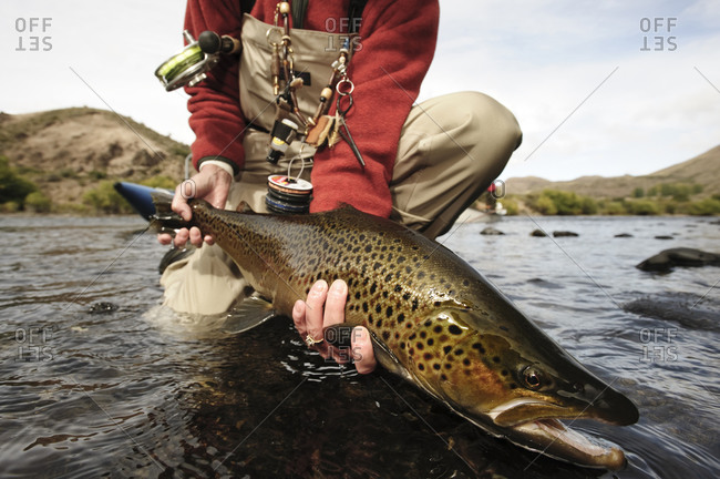 Angler releasing a large brown trout back into the Rio Limay in Patagonia near Bariloche, Argentina