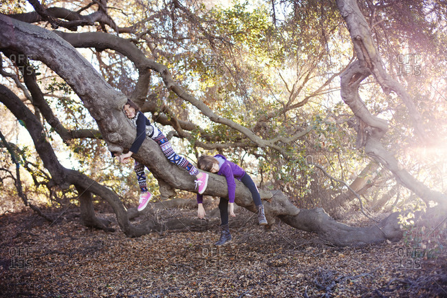 Two girls hanging on branch of live oak tree