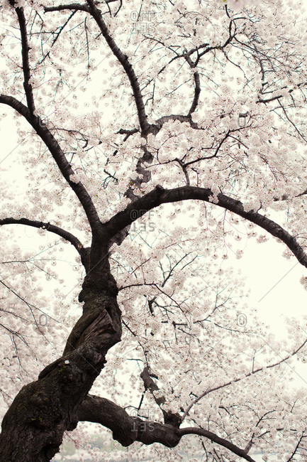Low angle view of a tree in bloom