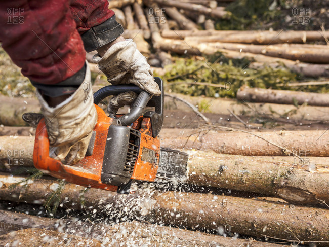 Lumberjack sawing tree trunks with motor saw