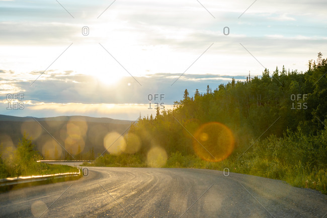 Sunny road through the wilderness