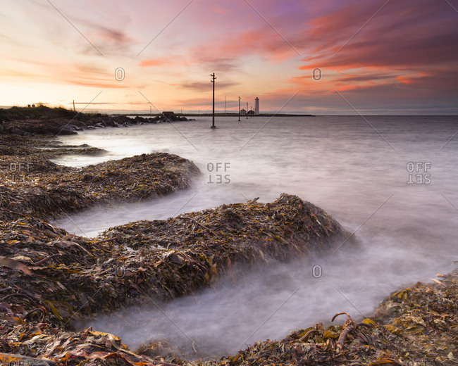 Waves crash on kelp covered rocks in Seltajarnarnes, Iceland at dusk