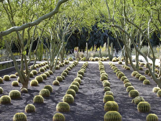 A desert garden in Palm Springs, California