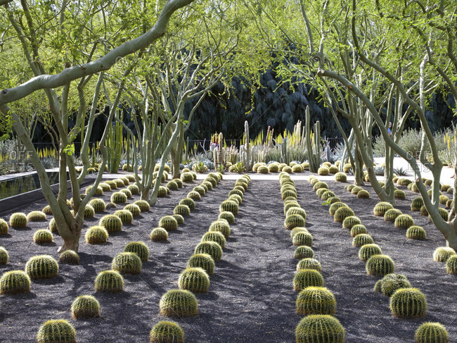 A desert garden in Palm Springs, California