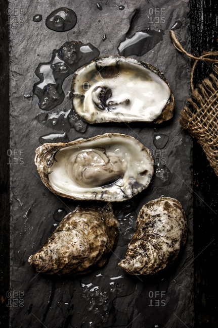 Oysters served on dark slate