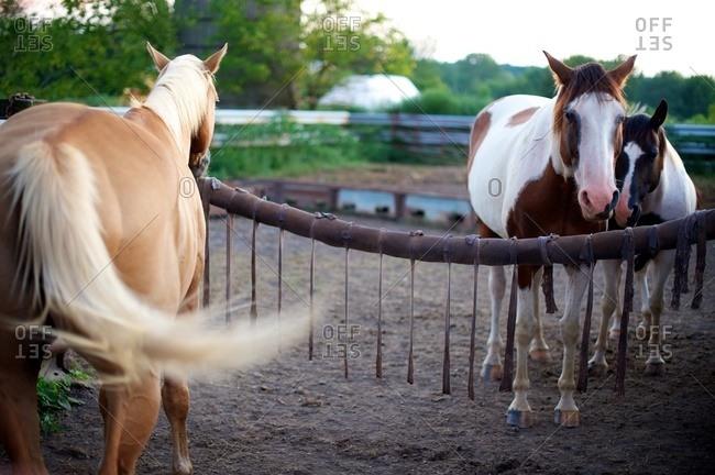 Horses standing in a pen
