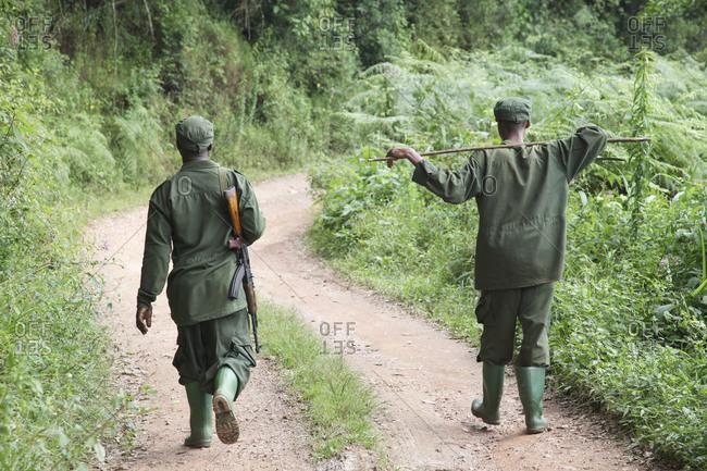 Bwindi National Park, Uganda - January 16, 2010: Ranger armed with rifle patrolling in Bwindi National Park, Uganda