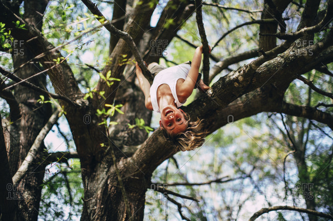 Boy dangling upside down from tree branch