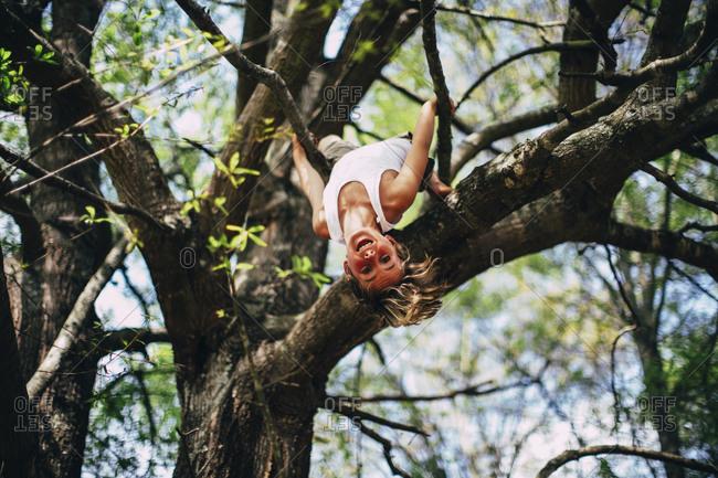 Boy dangling upside down from tree branch
