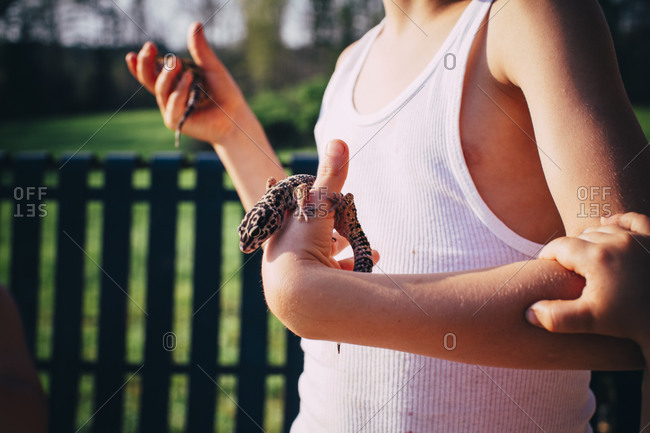 Boy holding leopard geckos away from sibling's hand
