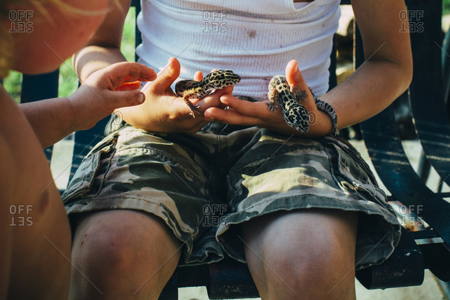 Boy sitting on bench with leopard geckos
