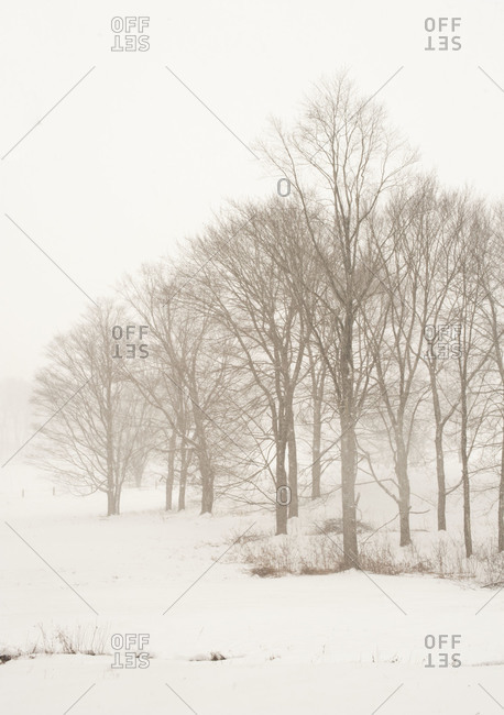 Trees in the snowy winter