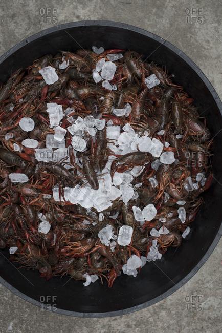 Fresh crayfish and ice