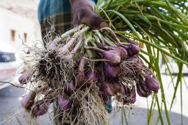 Man holding a bunch of purple onions in Mibam,  Wadi Tiwi,  Sultanate of Oman