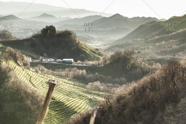 View from Strada del Prosecco to hills with grapevines in the morning mist, Treviso