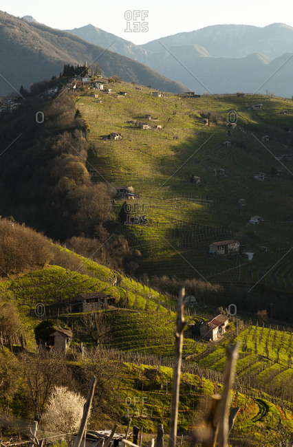 View from Strada del Prosecco to hills with grapevines at sunrise, Treviso