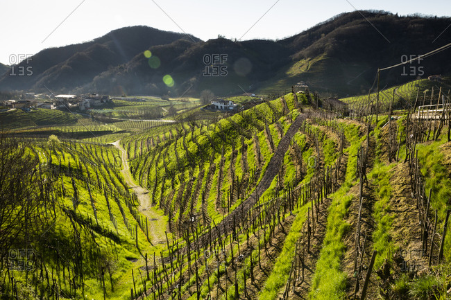 View from Strada del Prosecco to hills with grapevines at morning twilight, Treviso