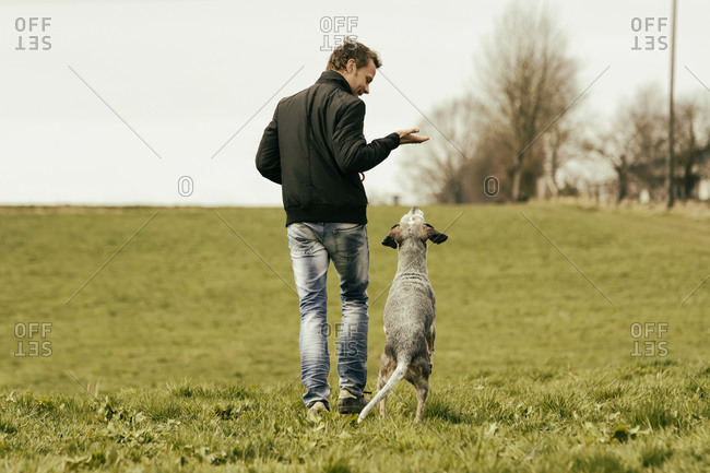 Man exercising with dog on meadow