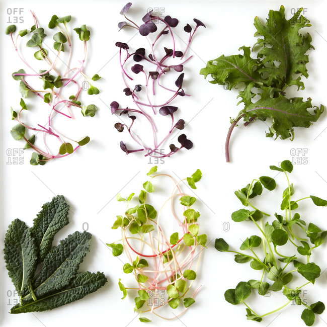 Variety of salad greens arranged on white
