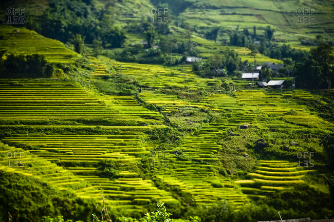 Verdant green rice terraces in Sapa, Vietnam