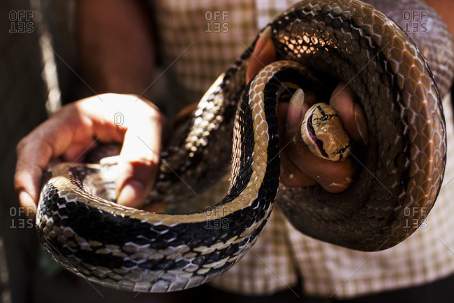 Man holding snake in Vietnam