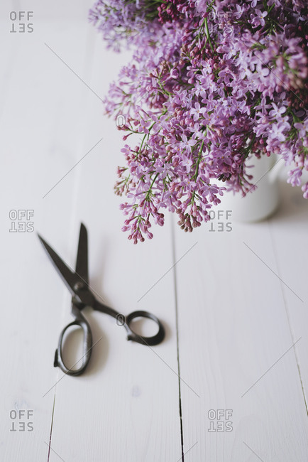A pair of scissors next to lilac flowers