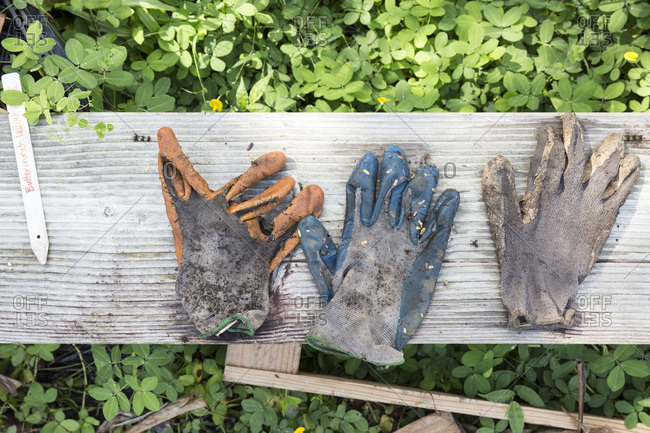 Gardening gloves on a bench