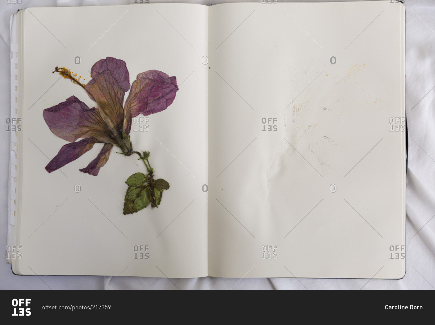 Pressed hibiscus flower in a book stock photo offset pressed hibiscus flower in a book izmirmasajfo Gallery