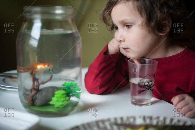 Little boy looking at a goldfish in a jar