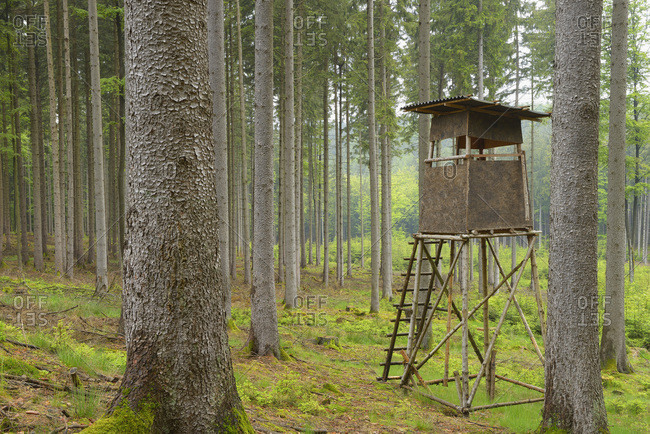 A hunting blind in a spruce forest in Spessart, Bavaria, Germany