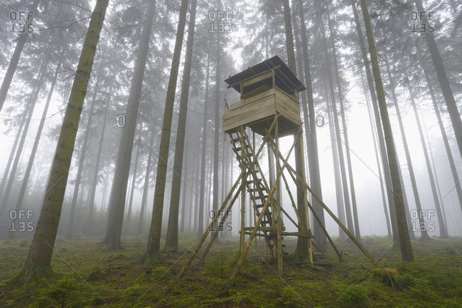 A hunting blind in a spruce forest in Odenwald, Hesse, Germany