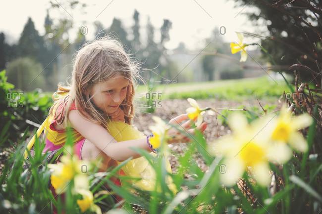 Young girl touching a daffodil in a garden