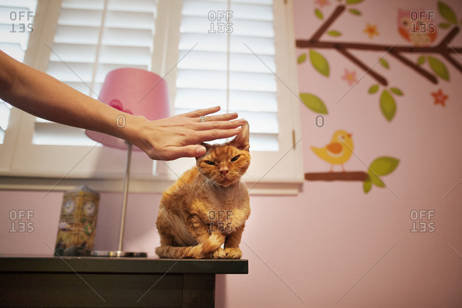 Person petting an orange tabby cat
