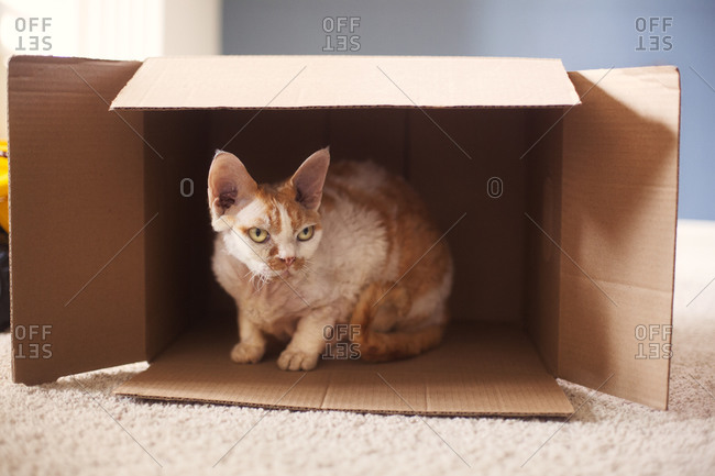Orange tabby cat sitting in a box