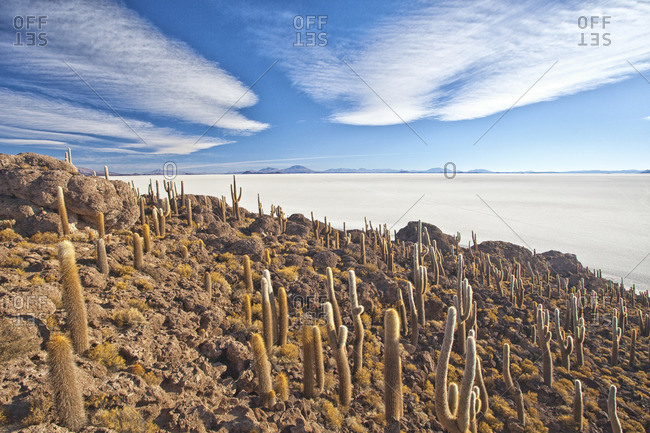 An amazing view from the top of the Isla Incahuasi, Salar de Uyuni, Bolivia, South America