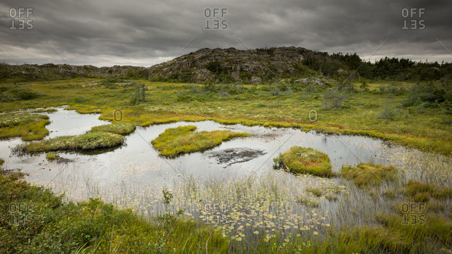 Marsh under an overcast sky in Newfoundland, Canada