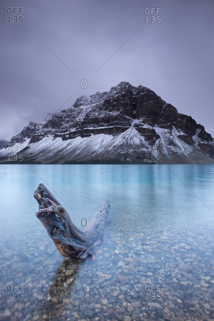 Driftwood in Bow Lake, Alberta, Canada