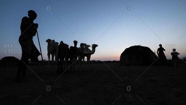 Northern Kenya - February 19, 2015: Silhouette of a camel herder with his animals at dusk