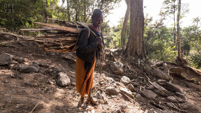 Mount Kulal, Kenya - February 23, 2015: Woman carrying firewood in a forest