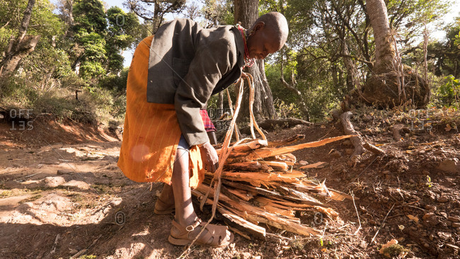 Mount Kulal, Kenya - February 23, 2015: Woman gathering firewood in a forest