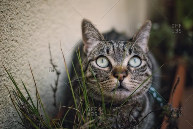 Tabby cat hiding among the plants on a terrace