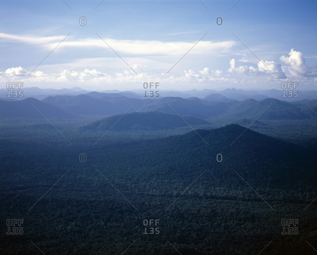 A forest covering a vast mountain range