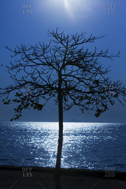 A tree in the moonlight