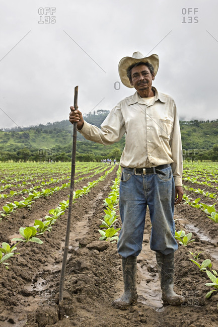A tobacco farmer standing in a tobacco field in the Jamastran Valley, Danli, Honduras