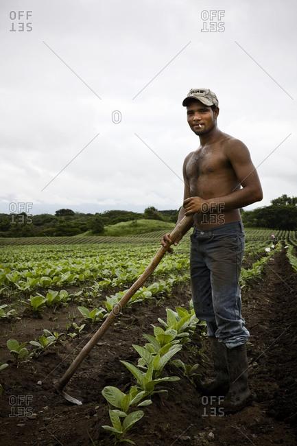 A tobacco field worker pauses in a Jamastran Valley Field, Danli, Honduras