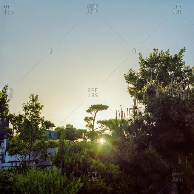 Sun setting through trees in a cemetery in Yagoto, Nagoya, Japan