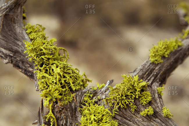 A close-up of moss growing on wood in Horse Ridge, Oregon