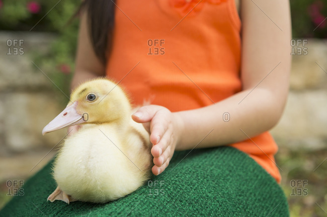 A child with a duckling on her lap