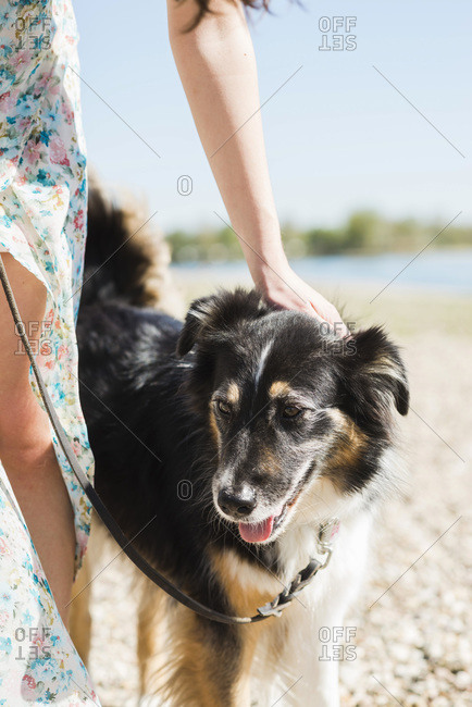 Woman with dog outdoors in summer