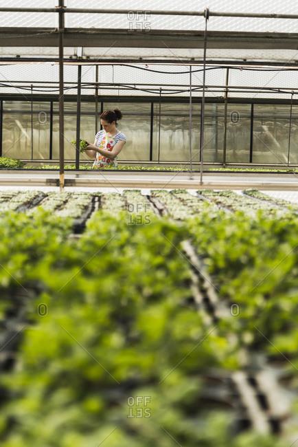 Young female gardener working in plant nursery